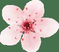 flower 4 1 - Maquillage permanent à Villeneuve-loubet - Nice - Antibes