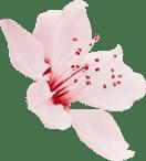 flower 5 - Maquillage permanent à Villeneuve-loubet - Nice - Antibes